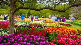 【自由鸟】留住春天的脚步,带走幸福的欢笑
