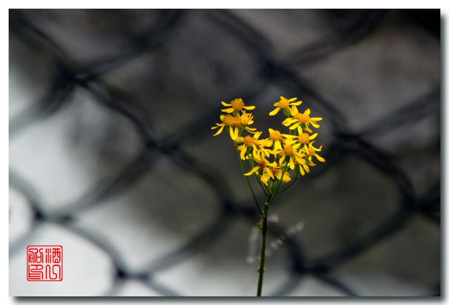 《原创摄影》:湖光山色洛基行 - 山里的野花静静开_图1-3