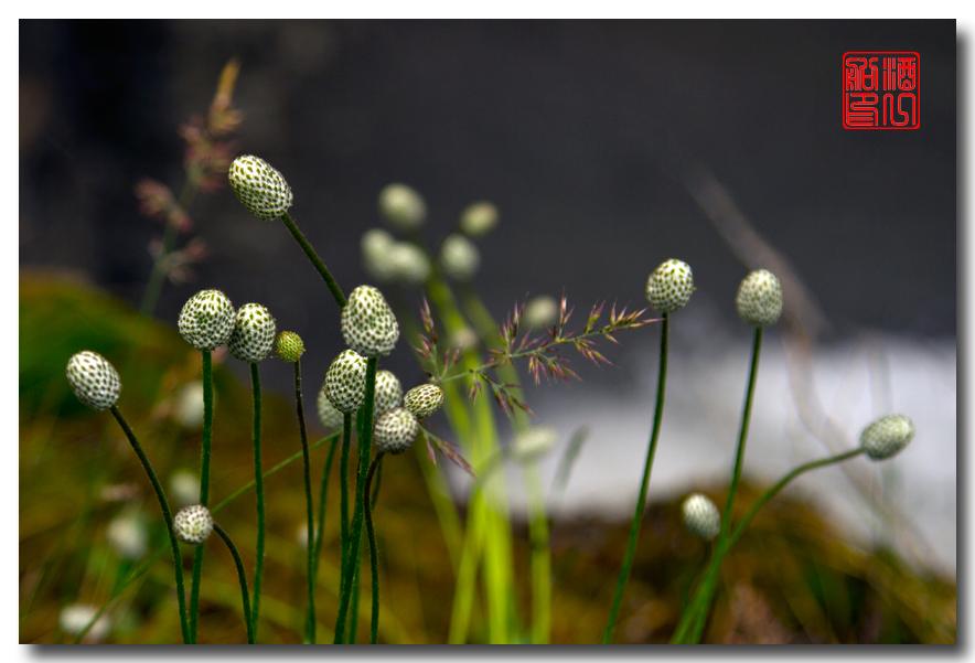 《原创摄影》:湖光山色洛基行 - 山里的野花静静开_图1-4