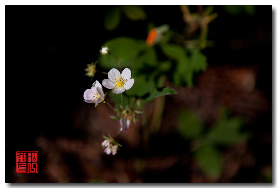 《原创摄影》:湖光山色洛基行 - 山里的野花静静开_图1-11