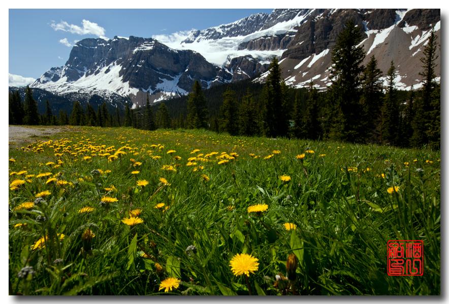《原创摄影》:湖光山色洛基行 - 山里的野花静静开_图1-22