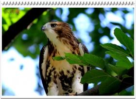 六只眼:雏鹰学飞