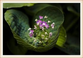 【star8拍攝】光影--花