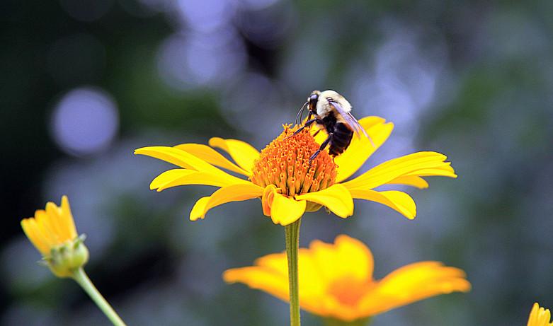 蜂儿一生寻香辛勤采_图1-1