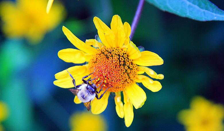 蜂儿一生寻香辛勤采_图1-2