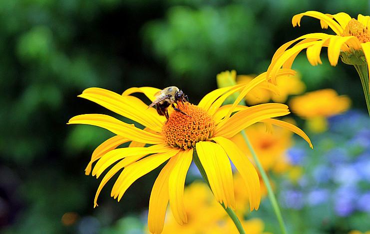 蜂儿一生寻香辛勤采_图1-3