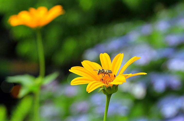 蜂儿一生寻香辛勤采_图1-4