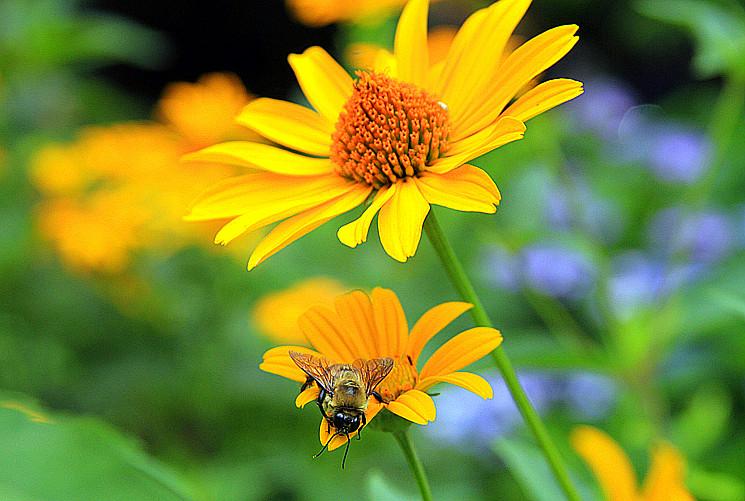 蜂儿一生寻香辛勤采_图1-5
