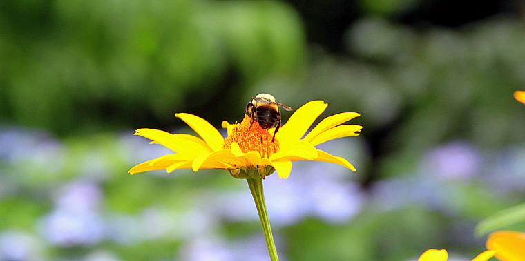 蜂儿一生寻香辛勤采_图1-6