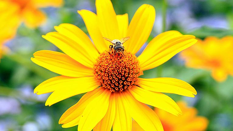 蜂儿一生寻香辛勤采_图1-7