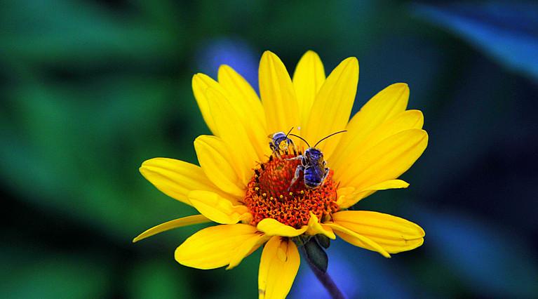 蜂儿一生寻香辛勤采_图1-8