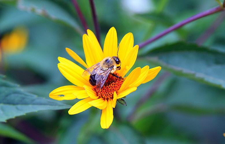 蜂儿一生寻香辛勤采_图1-9