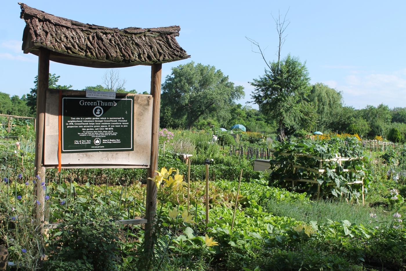法拉盛社区菜园_图1-2