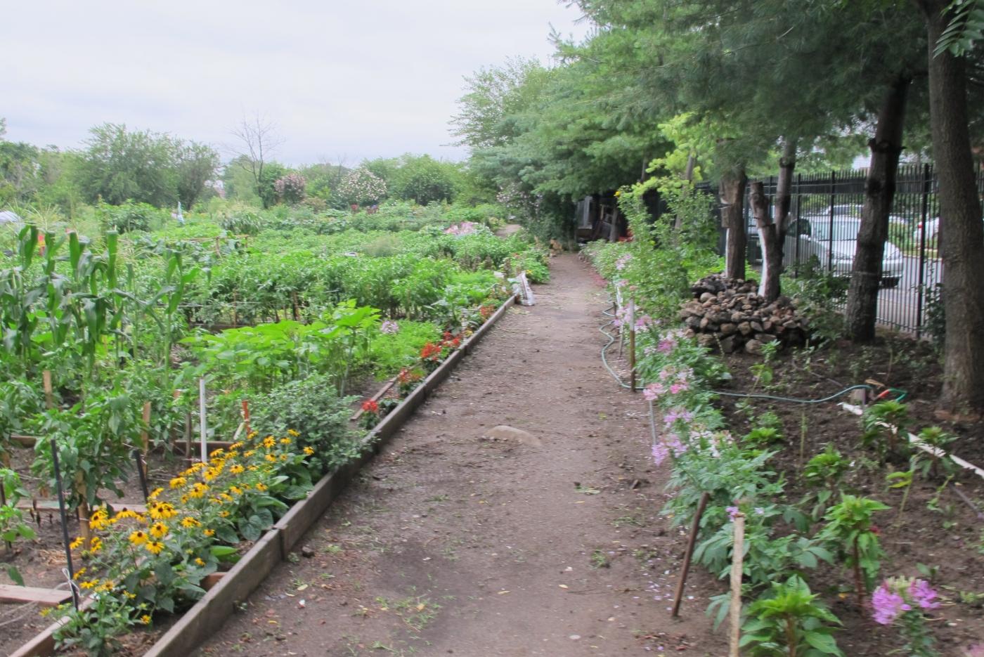 法拉盛社区菜园_图1-6