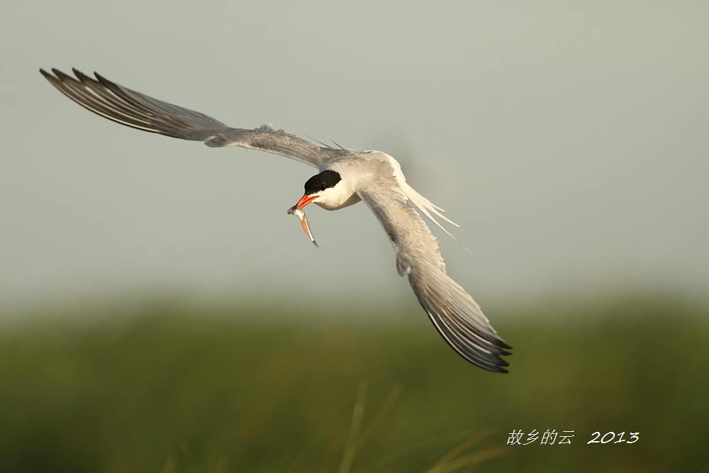 飞翔的燕鸥_图1-3