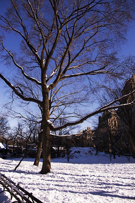 (原创摄影)冰冻覆盖的中央公园_图1-8