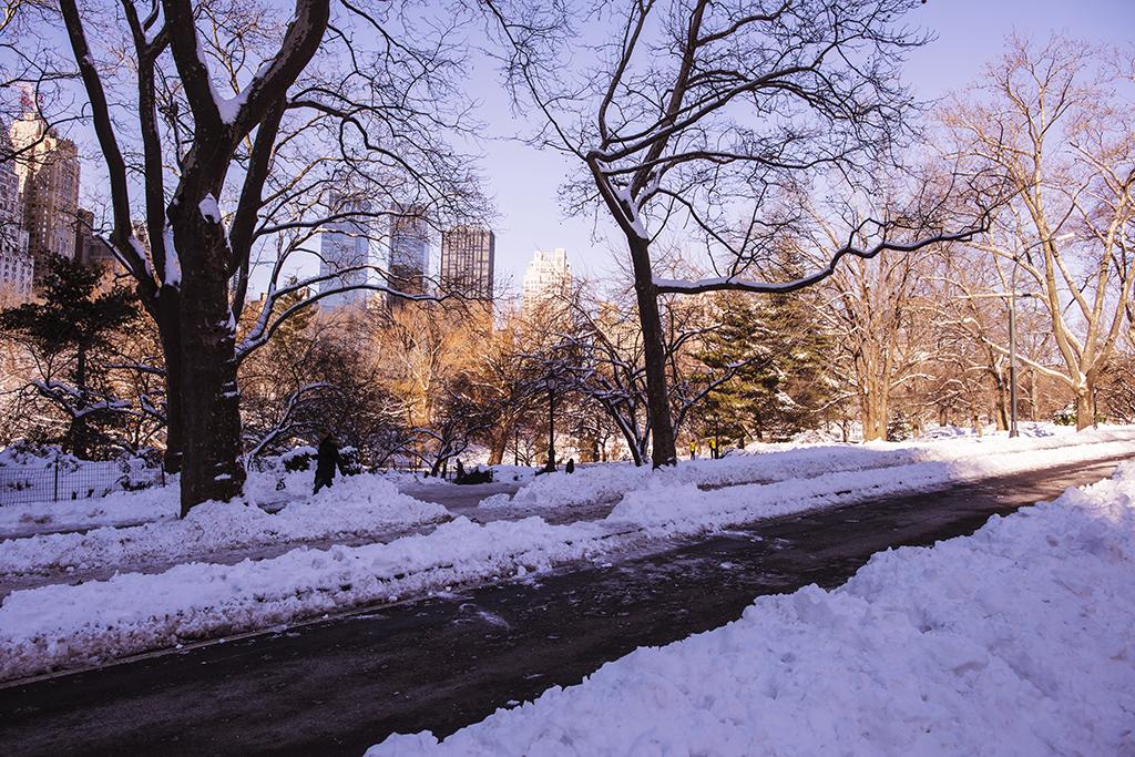 (原创摄影)冰冻覆盖的中央公园_图1-7