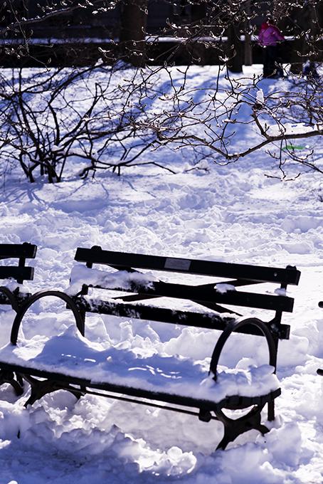 (原创摄影)冰冻覆盖的中央公园_图1-10