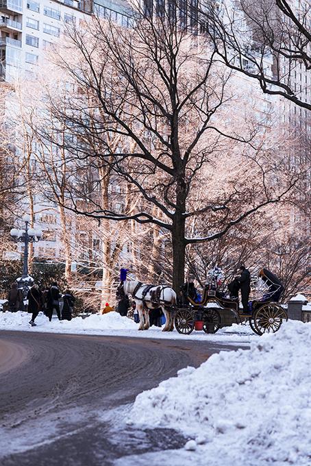 (原创摄影)冰冻覆盖的中央公园_图1-12