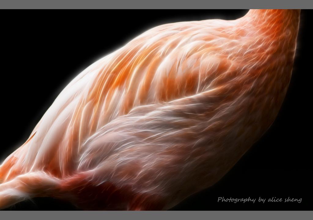 美丽的火烈鸟之二_图1-5