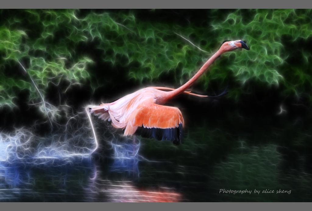 美丽的火烈鸟之二_图1-3