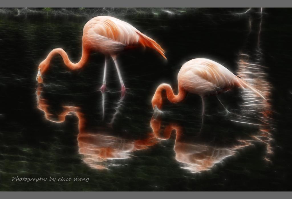 美丽的火烈鸟之二_图1-2