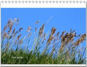 【小虫摄影】美国农场摄影-华盛顿州