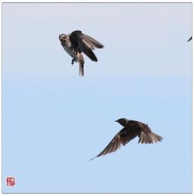 【心想事成】飞鸟