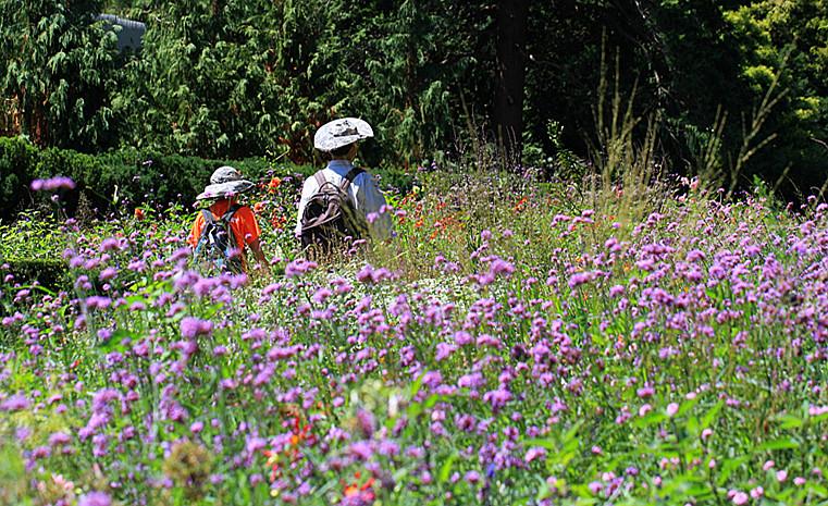 一组【紫花也引蜂鸟】!_图1-10