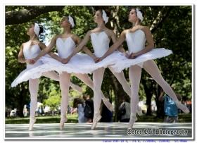 纽约夏季舞蹈节
