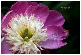【小虫摄影】留住春天的花儿