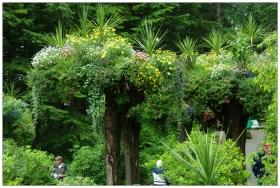 蒼翠如茵的热带雨林