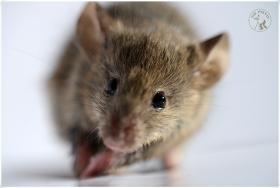 【相机人生】(420)小鼠图