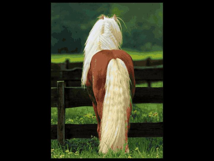 美丽的马,太美了!_图1-2