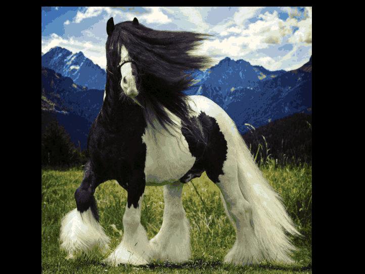美丽的马,太美了!_图1-3
