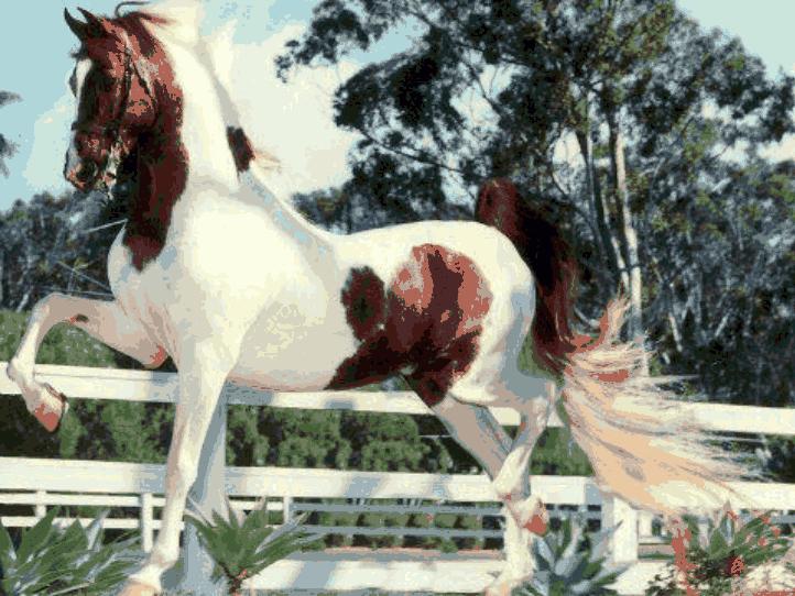 美丽的马,太美了!_图1-4