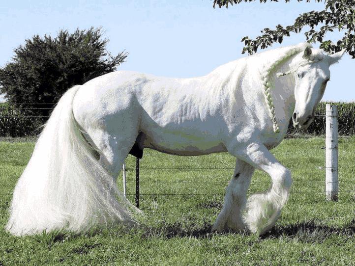 美丽的马,太美了!_图1-5