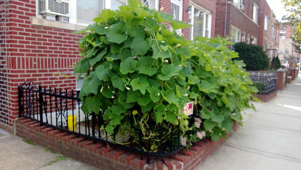 手机实拍:小小菜园~绿色温馨 完美收获_图1-1