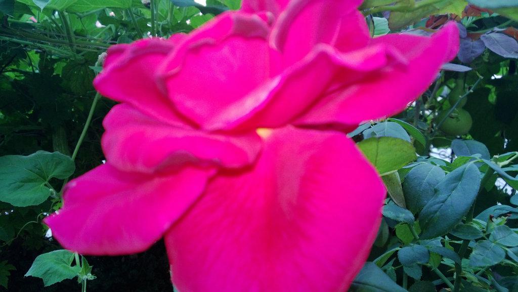 手机实拍:小小菜园~绿色温馨 完美收获_图1-14