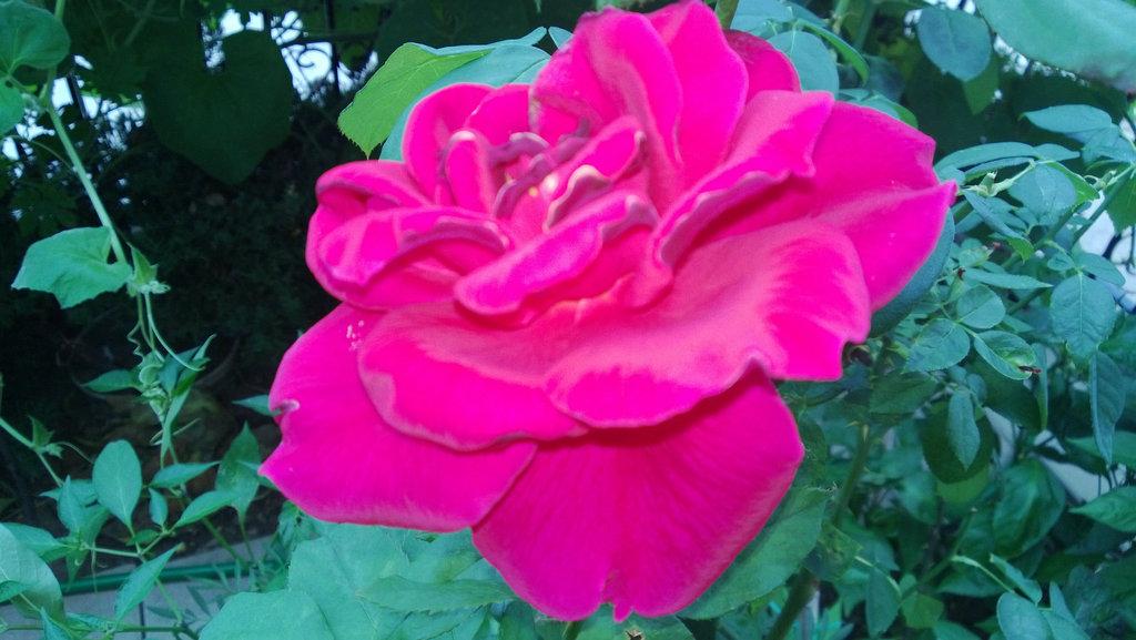 手机实拍:小小菜园~绿色温馨 完美收获_图1-17