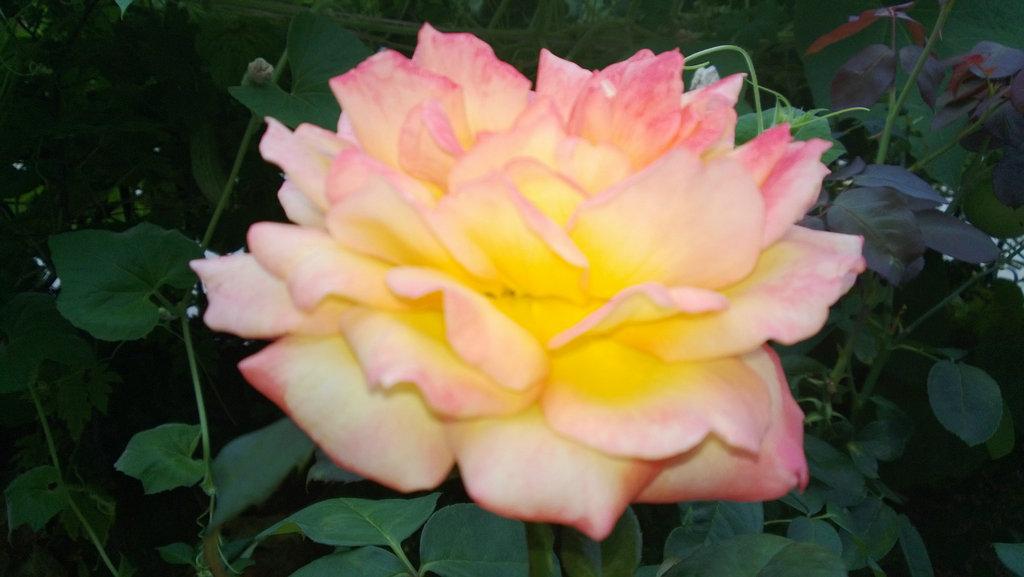 手机实拍:小小菜园~绿色温馨 完美收获_图1-16