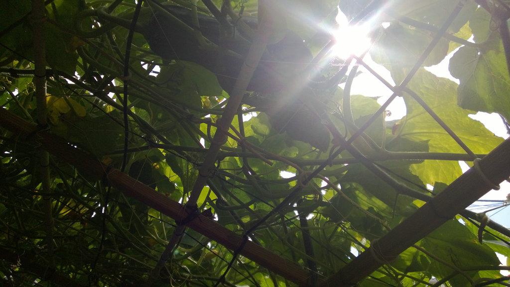 手机实拍:小小菜园~绿色温馨 完美收获_图1-25