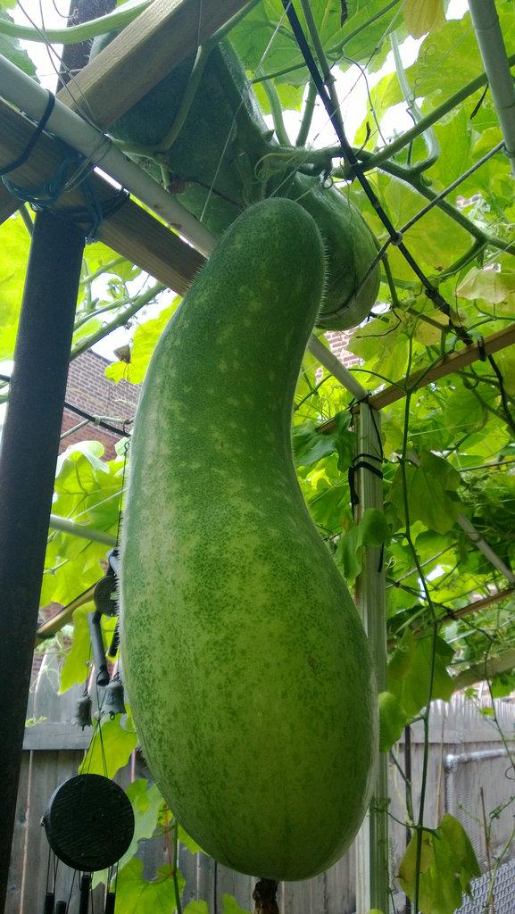 手机实拍:小小菜园~绿色温馨 完美收获_图1-32