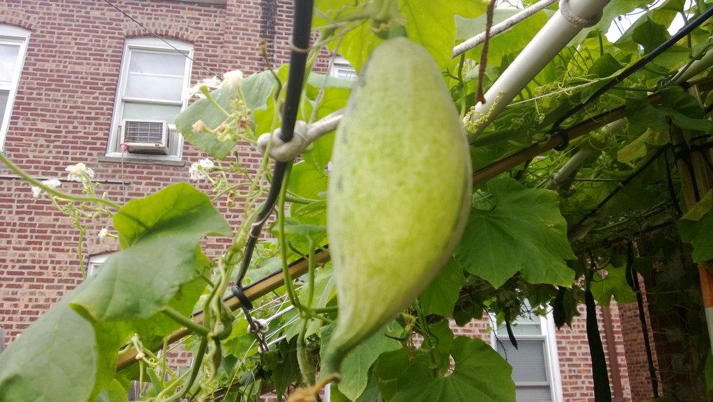 手机实拍:小小菜园~绿色温馨 完美收获_图1-34