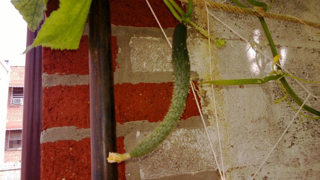 手机实拍:小小菜园~绿色温馨 完美收获_图1-40