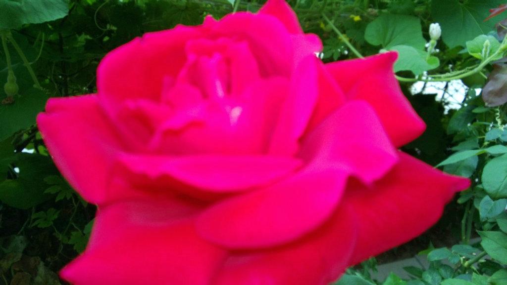 手机实拍:小小菜园~绿色温馨 完美收获_图1-45