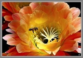 五颜六色的仙人掌花
