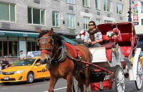 【马车】是Central Park的一道风景!
