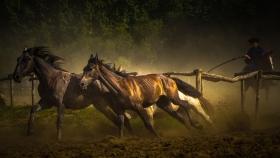 【自由鸟】奔腾的野马,势如破竹,匈牙利牧