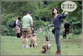 【star8拍攝】帶狗训练班